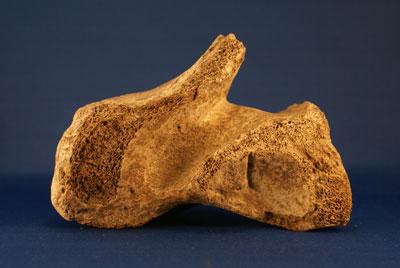 giant-bone